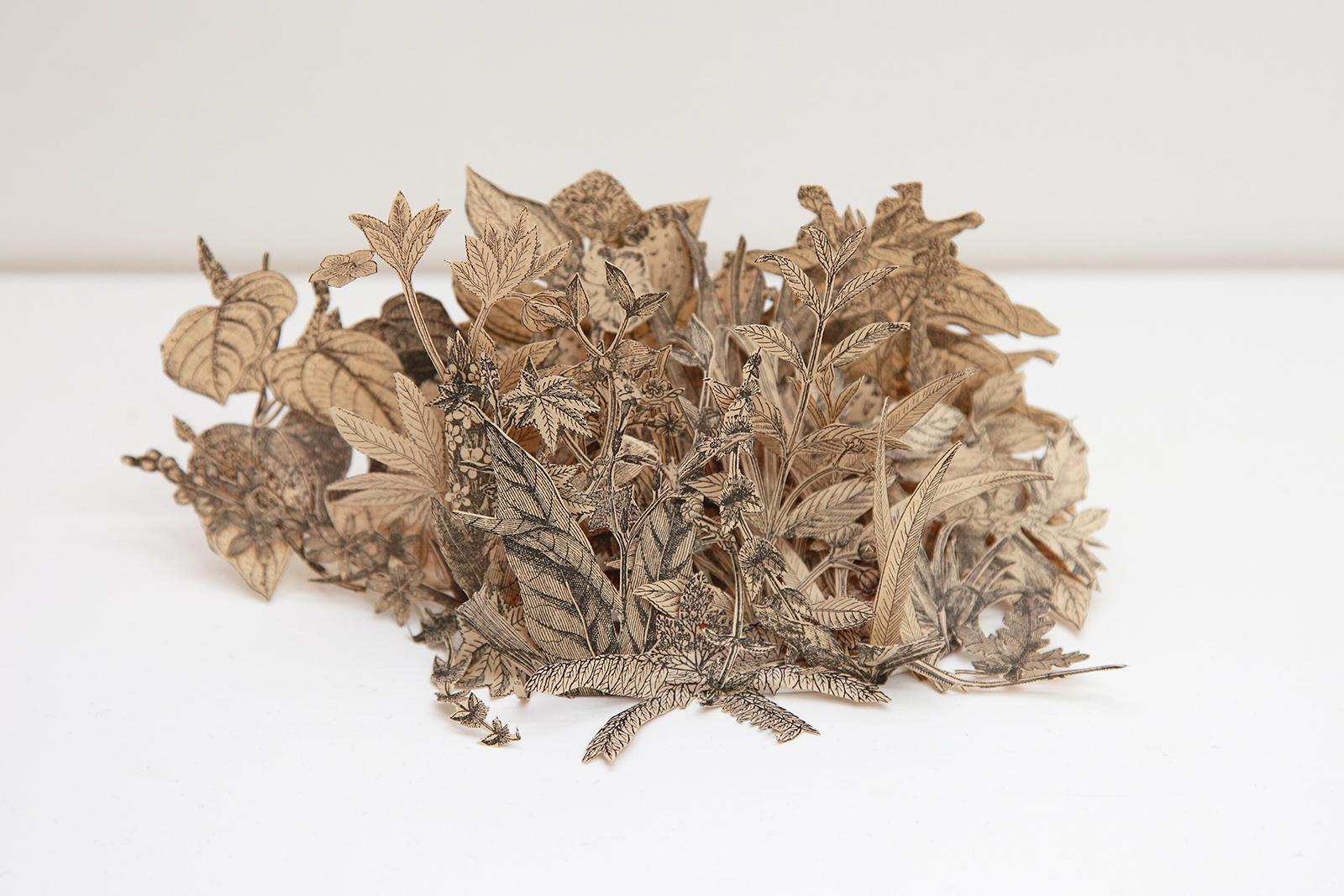 Rodrigo Arteaga Herbarium of botanical studies, 2015 Cut-out botanical books, Variable dimensions