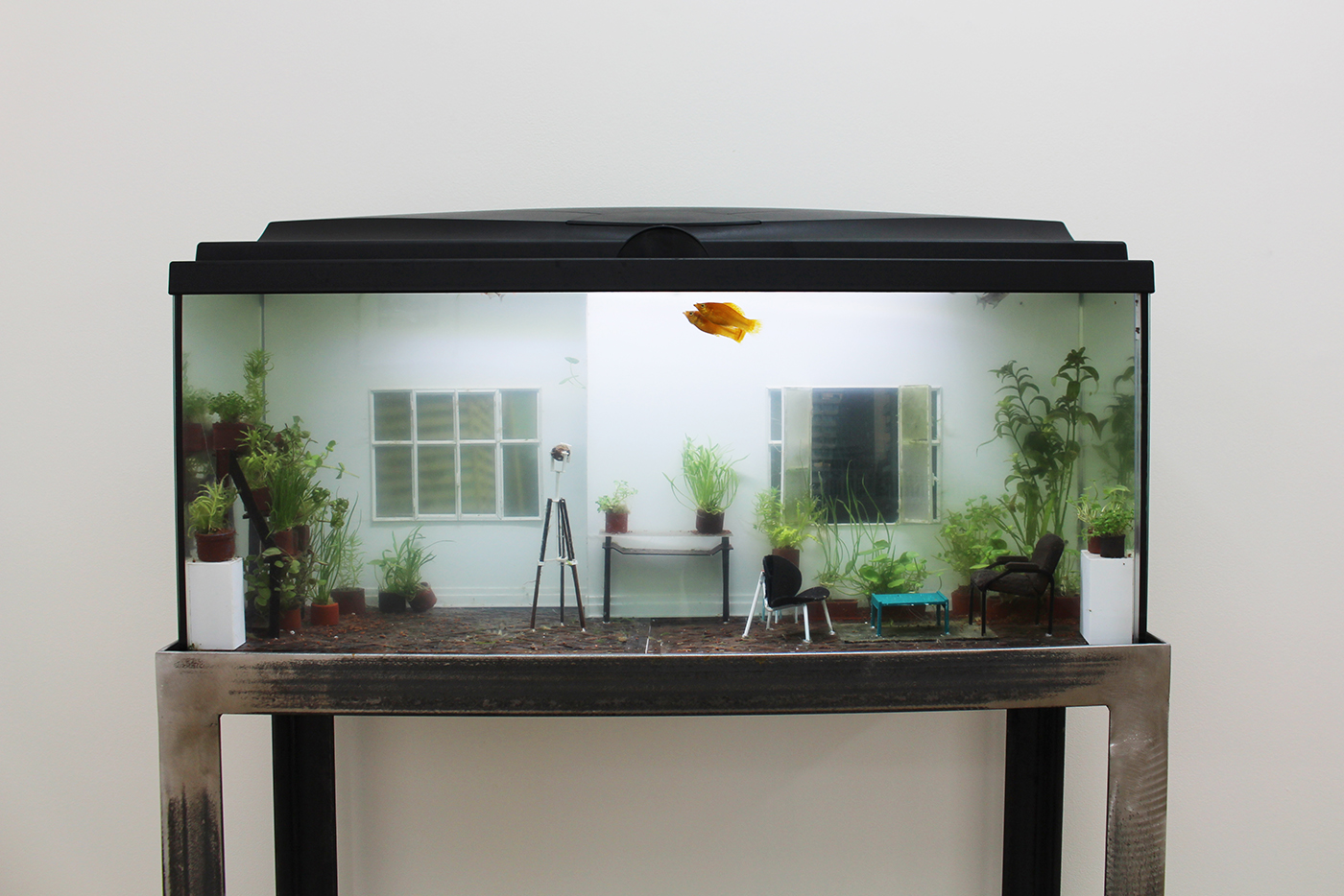 Rodrigo Arteaga, Öekologie, 2016, Aquarium with live fishes, live plants and miniature elements, 80 x 30 x 40