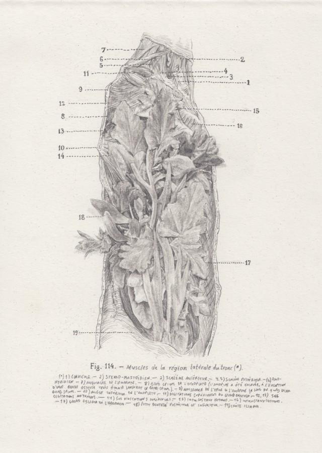 Rodrigo Arteaga Encyclopedic drawings, 2015 Graphite on paper, 25 x 18 cm each / detail