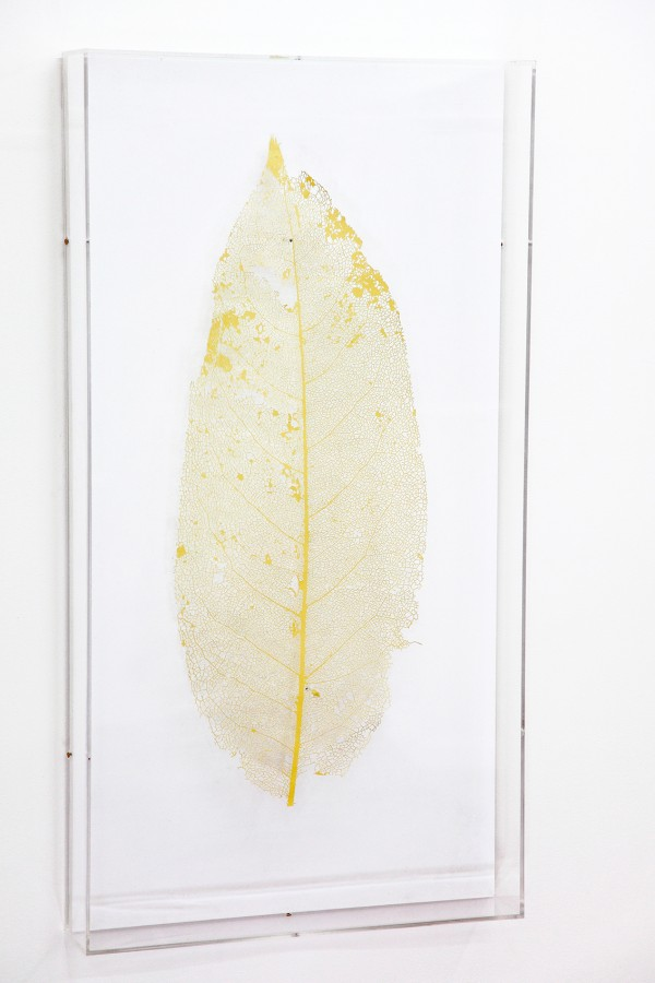 Rodrigo Arteaga Botanical scope, 2015 Cut-out digital print, Plexiglas box, Variable dimensions