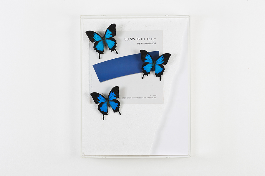 Jonathan Monk Butterflies Holding Advert In Place (Kelly Curve Blue), 2014 , Papilio ulysses ssp. ulysses on artforum advertisement in clear acrylic box, 51 x 39 x 9 cm