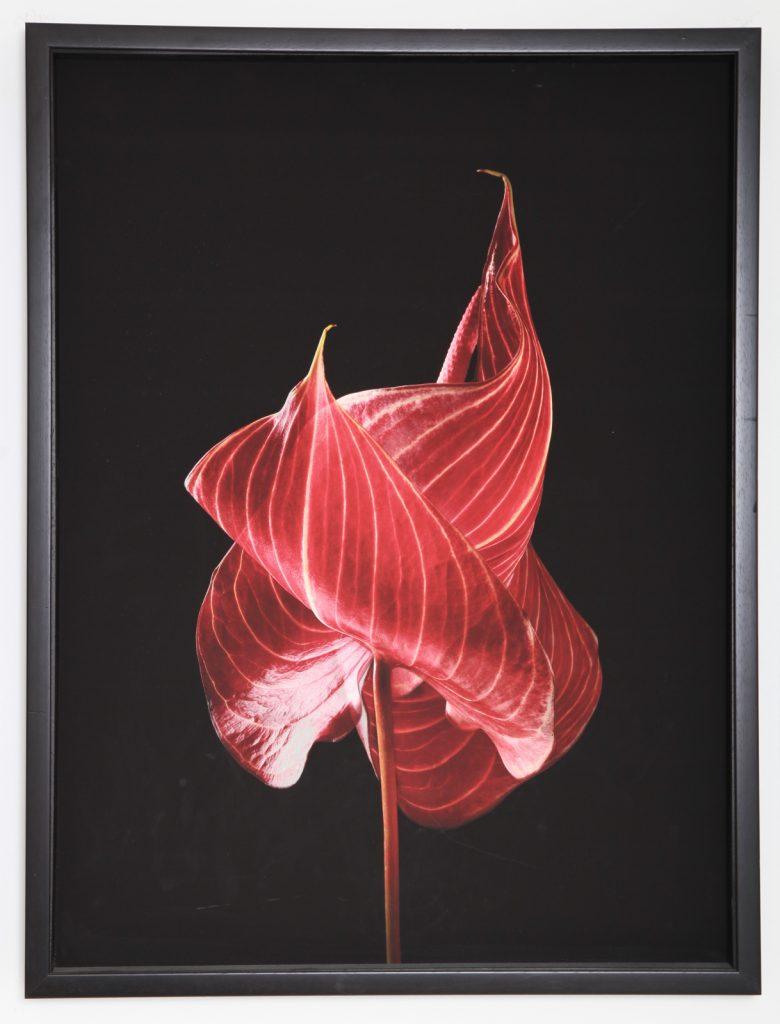 "Toya Legido, ""Las Floras De Otro Mundo"", 2017-2019, Jet d'Encre sur Papier Coton, /5, 60 x 80 cm"