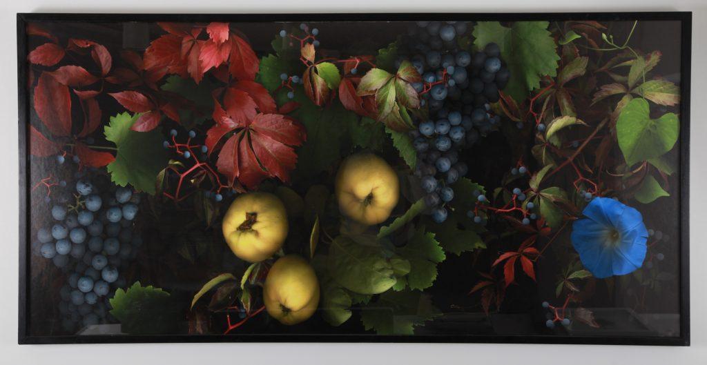 """Carmen Van den Eynde, """"Ipomea, Uvas y Membrillo"""", 2011, Photographie Impression Numérique sur Beaux Arts Baryta, 80 x 165 cm."""