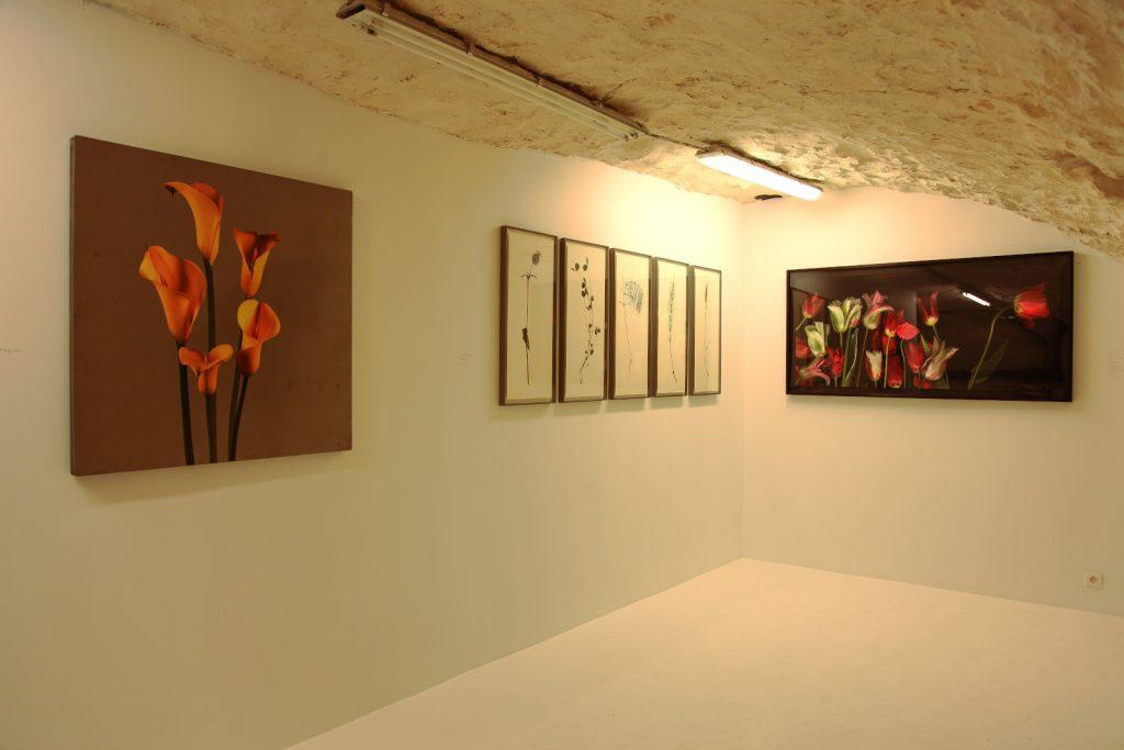 Exhibition View - Jardines Imaginarios - September 2020