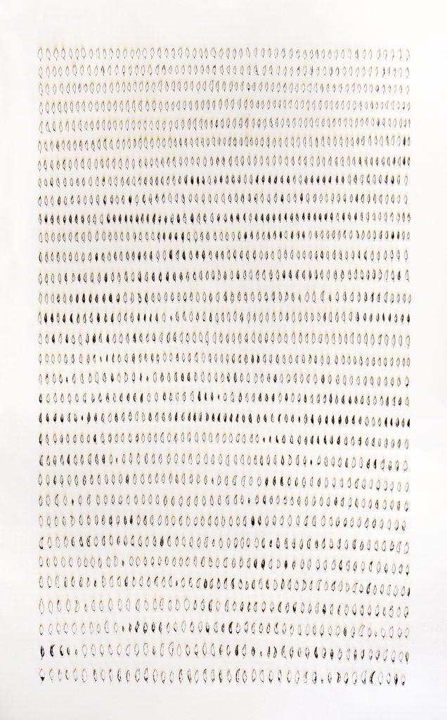 Rodrigo Arteaga, monocultures, papier brûlé